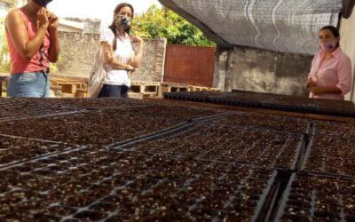 Producción de plantines de emporada Otoño – Invierno