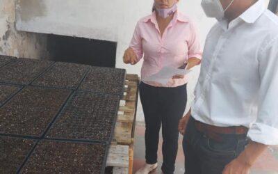Secretario de Gobierno y Hacienda recorrió la producción de plantines de temporada