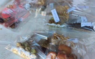 Prohuertá en Santa Elena – distribución de semillas.